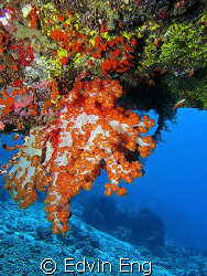 Hanging Soft Coral. Taken in Sipadan with Canon S80, Inon... by Edvin Eng